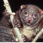 Possum hd pics