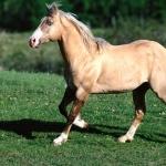 Quarter Horse pics