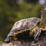 Tortoise 2016