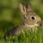Bunnies high definition photo