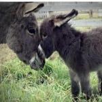 Donkey photos