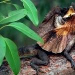 Lizard hd pics