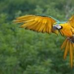 Macaw hd pics