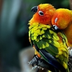 Parrot pics
