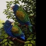Pionus Parrot hd pics