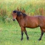 Quarter Horse X Appaloosa wallpapers hd