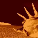 Sea Snail breed