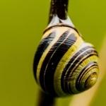 Snail wallpapers hd