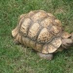Tortoise download wallpaper