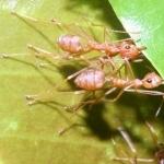 Ants hd wallpaper