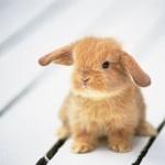 Bunnies new photos