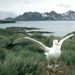 Campbell Albatross high definition wallpapers