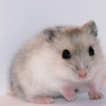 Hamster free download