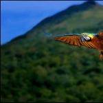 Macaw cute
