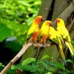 Parrot wallpapers for desktop
