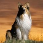 Shetland images